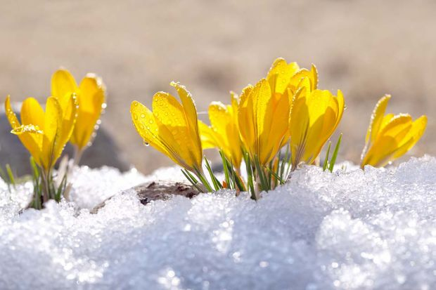 Photo: Frühlingsblumen
